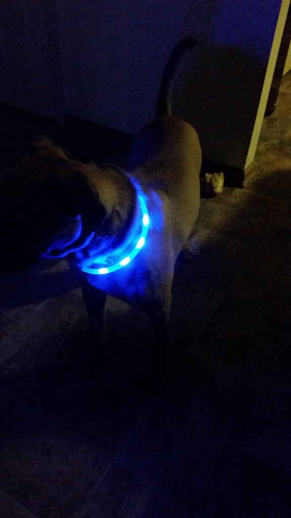 glow in the dark dog